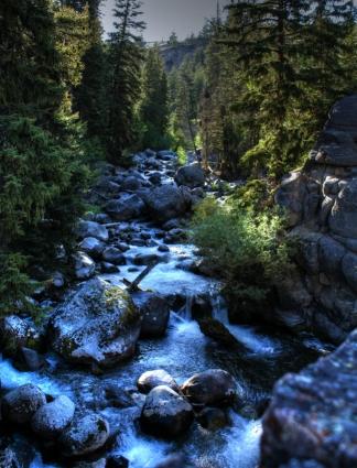 Mountain Stream in Yellowstone NP